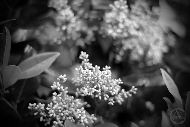 boredpictures_blooms_dublin-georgia